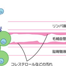 酸素カプセルの科学的な原理
